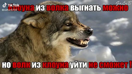 Обзор крутых цитат про волка из Тик ток